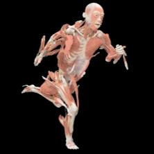 Mostra The Human Body a Torino
