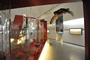 """Museo di Scienze Naturali di Torino, nuovo allestimento """"Lo Spettacolo della Natura"""""""
